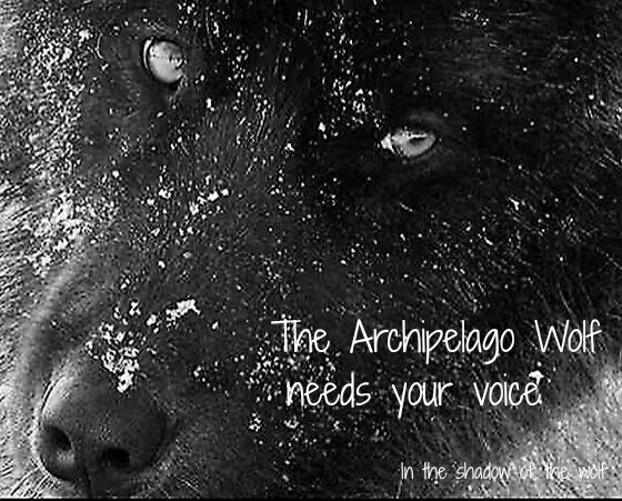 Be A Voice For Alaska's Archipelago Wolves