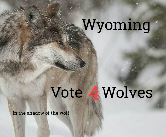 VOTE 4 WOLVES