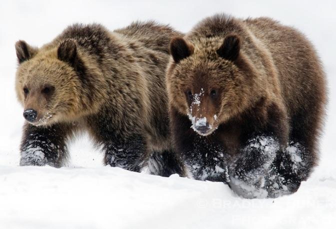 Delisting Grizzlies