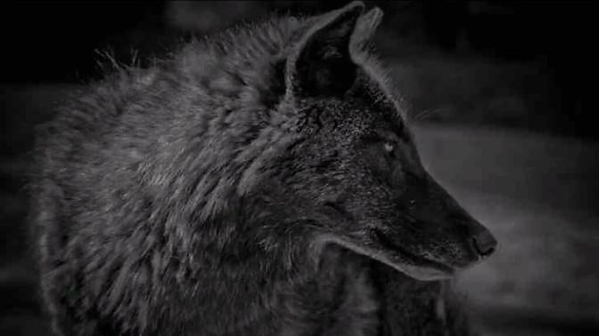 Tweet 4 Prince of Wales Wolves